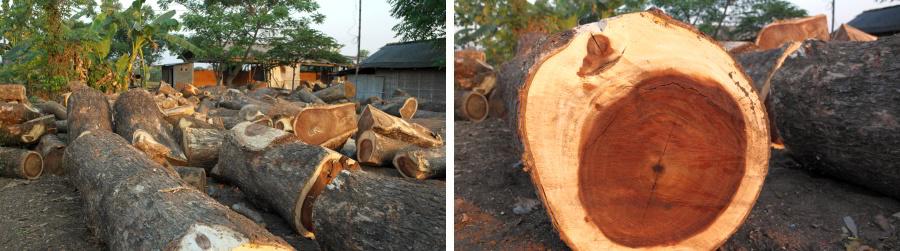 עץ מלא מאינדונזיה